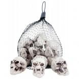 Lot 12 Crânes Squelette
